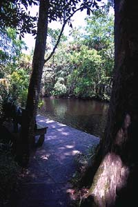 am_creek2
