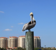 Daytona Beach FL IMG_0540