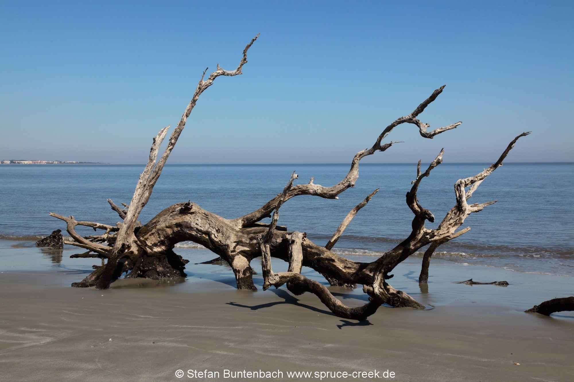 Jekyll Island Georgia IMG_6791