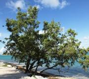 Key West Florida IMG_4659