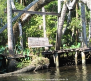 Spruce Creek Photos IMG_1954