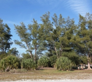 St Petersburg Florida IMG_8351